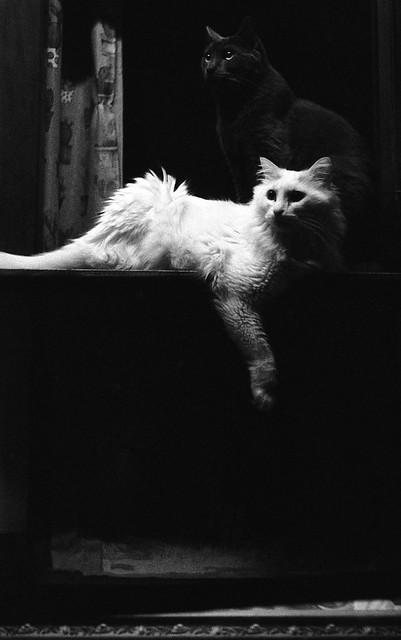 Notturno con gatti