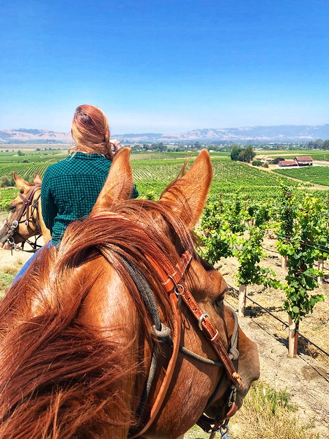 Vineyards between the ears, Sonoma Valley Trail Rides, CA