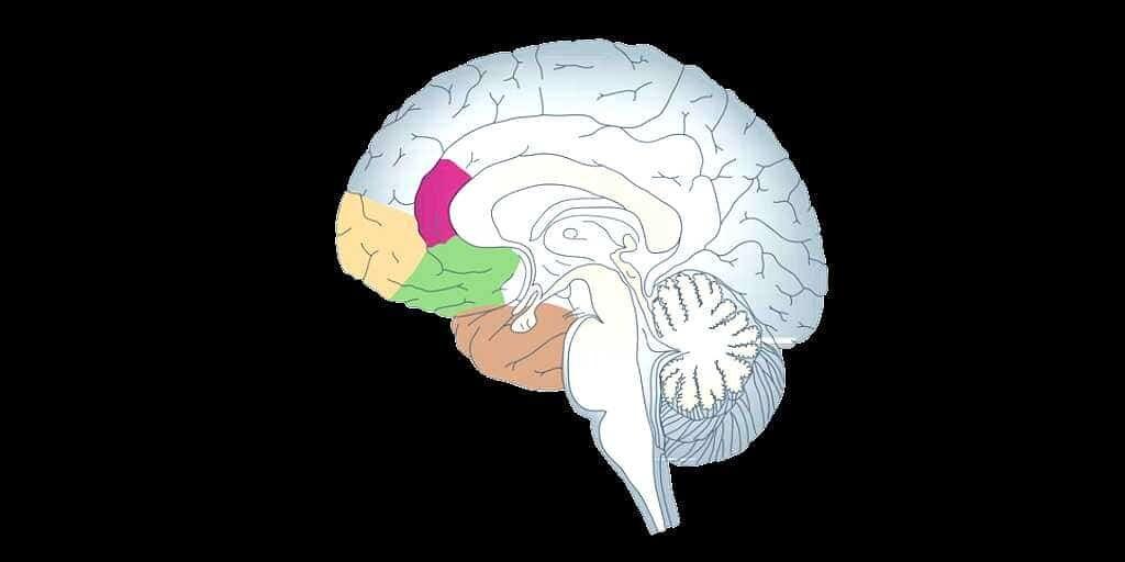 lésoins-cérébrales