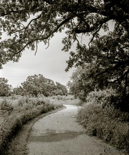 Under the Old Bur Oak