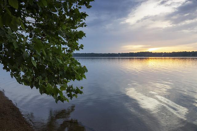 Potomac Sycamore
