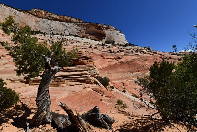 USA - Utah - Zion National Park - Zion-Mount Carmel Highway