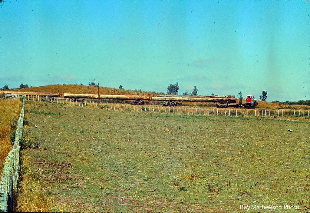 ST Mamaku Bush tram passing through farm land near the mill Jan 1974
