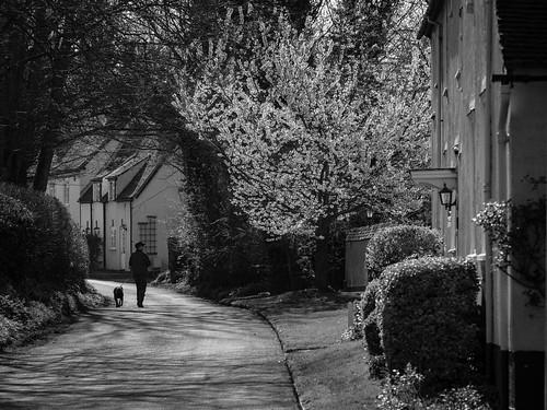 herts hertfordshire uk landscape landscapes light ashwell village life walk dog dogwalking spring