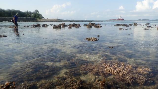Living shores of Terumbu Hantu, Jul 2019