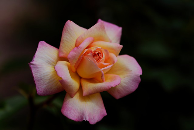 flower 1783