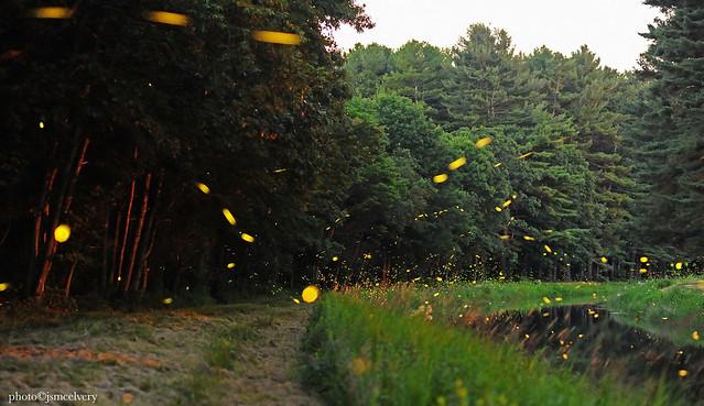 2019fireflies04july_d700jsm