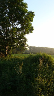 Sonnenaufgang in Dummersdorf - 01.07.19 (6)