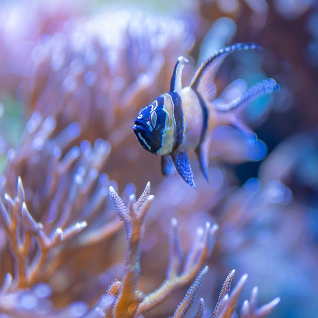 Finding Nemo | SONY ⍺7III & Sigma FE 1.4/50 Art