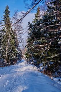 Winter forest walk. Sakhalin