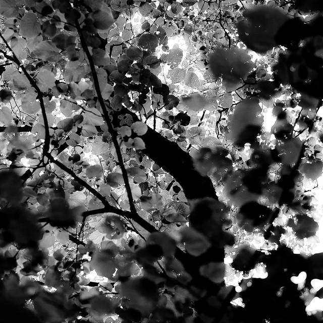 Up Through Trees 065