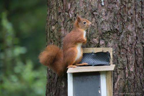 The Cute  Squirrel [Explore #140 ]
