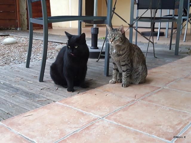 2-Pepper und Mimmi die Hotelkatzen
