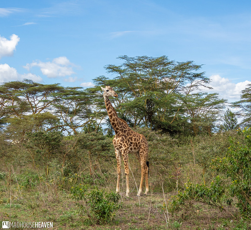 Kenya - 2326