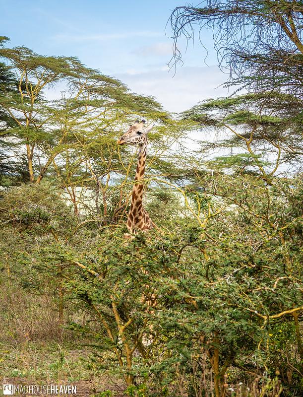 Kenya - 2322
