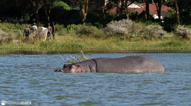 Kenya - 2471