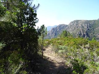 Le chemin de Paliri à travers le plateau sous Punta Russa : durant la descente après les travaux