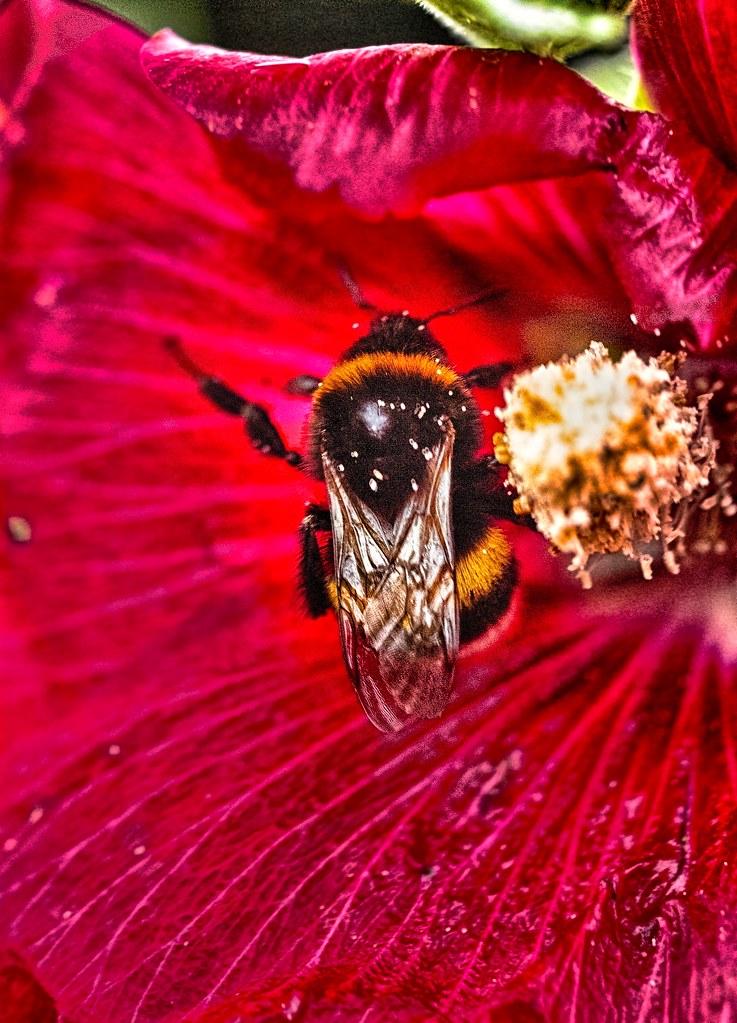Bienen Wiki