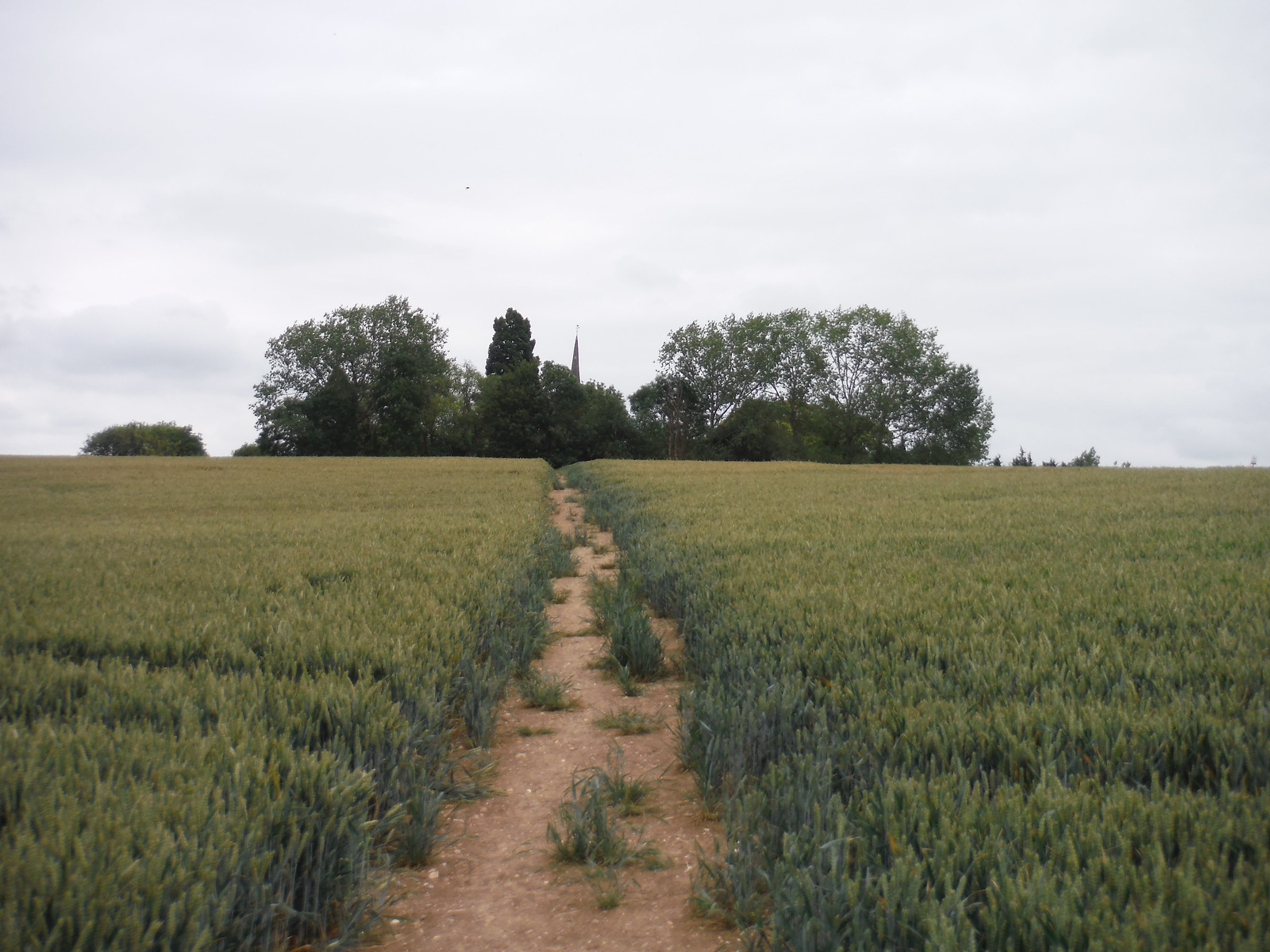 Towards Thorley Church SWC Walk 210 - Sawbridgeworth to Bishop's Stortfort (via Henry Moore Foundation)