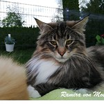 Die schönsten Katzenbilder unserer Züchter