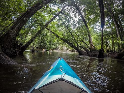 bambergchamberofcommerce bamberggounty copyright2019thomasetaylor edisto kayaking lowcountryunfiltered paddling southcarolina southfork cope unitedstatesofamerica