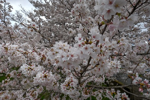 02-04-2019 Gose, Nara pref (24)