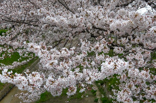 02-04-2019 Gose, Nara pref (22)