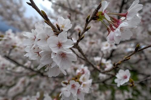 02-04-2019 Gose, Nara pref (26)