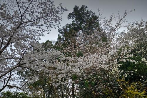 02-04-2019 Gose, Nara pref (10)