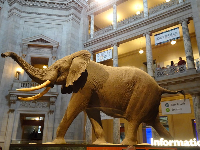 Smithsonian National Museum Of National History - Washington, DC (2)