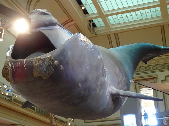 Smithsonian National Museum Of National History - Washington, DC (4)