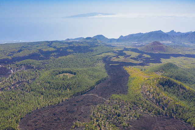 Frozen lava streams through pine trees in Teide National Park on Tenerife, Spain