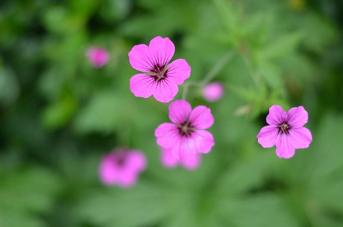 progressivly pink
