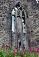 2019-06-07 06-22 Irland 595 Killarney, Muckross Lake Walk, Muckross Abbey