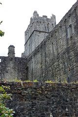 2019-06-07 06-22 Irland 594 Killarney, Muckross Lake Walk, Muckross Abbey