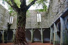 2019-06-07 06-22 Irland 588 Killarney, Muckross Lake Walk, Muckross Abbey