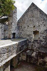 2019-06-07 06-22 Irland 589 Killarney, Muckross Lake Walk, Muckross Abbey