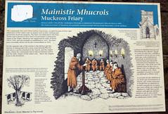 2019-06-07 06-22 Irland 582 Killarney, Muckross Lake Walk, Muckross Abbey