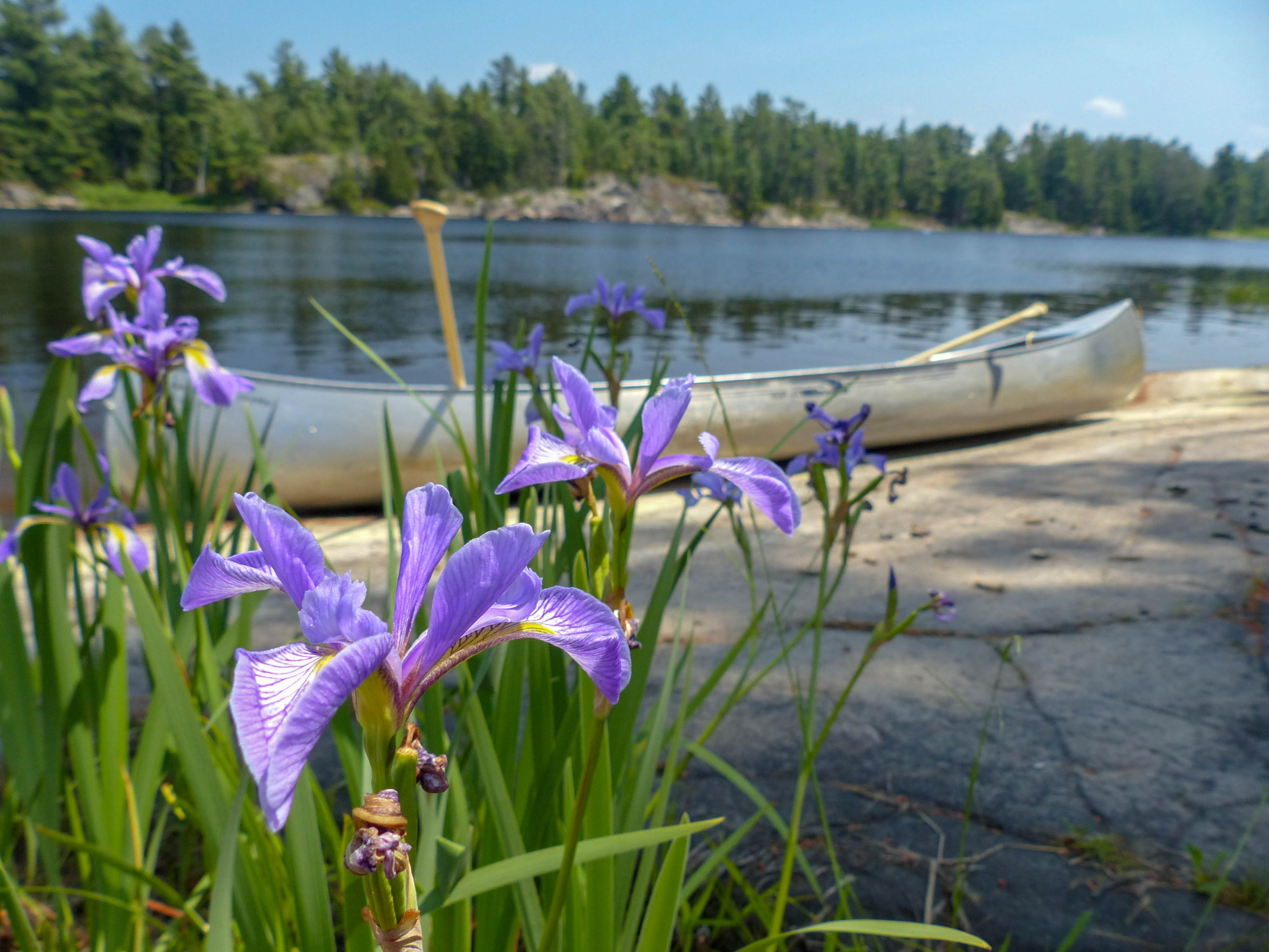 Grundy Lake and French River Provincial Parks (7)