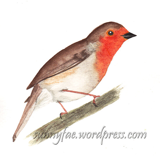 robin watercolour sketch