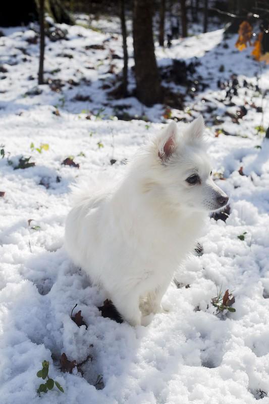 Winter the Eskimo Tuyen Chau