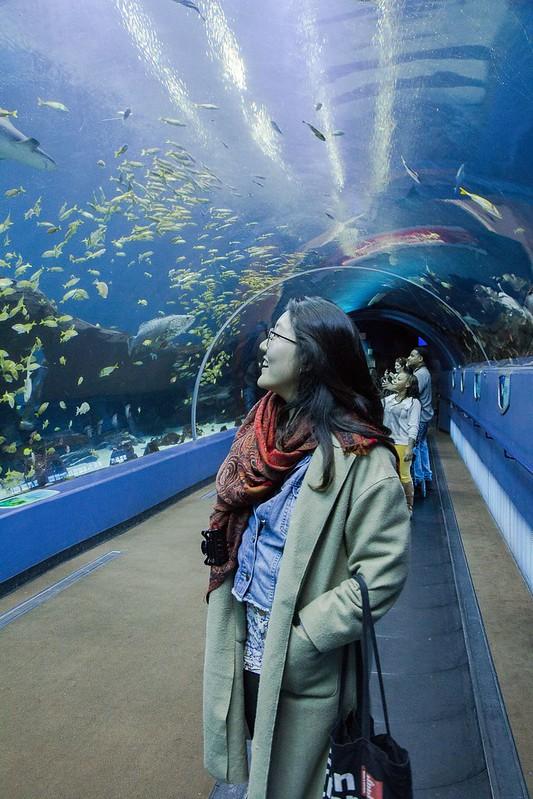 Georgia Aquarium Tuyen Chau