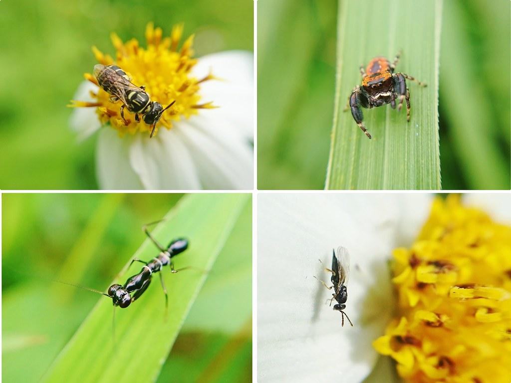 果園內的昆蟲
