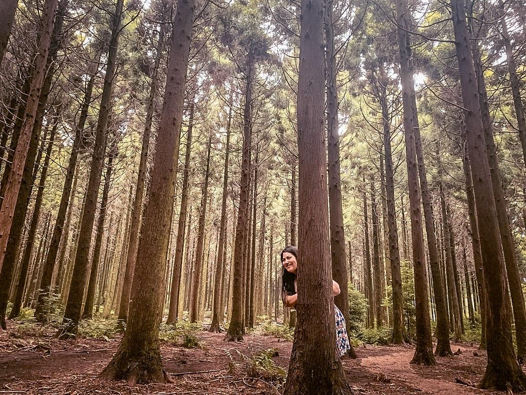 Jeju Itinerary   Jeolmul Forest Park