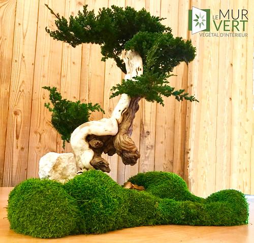bonsai-vegetal-sans-entretien
