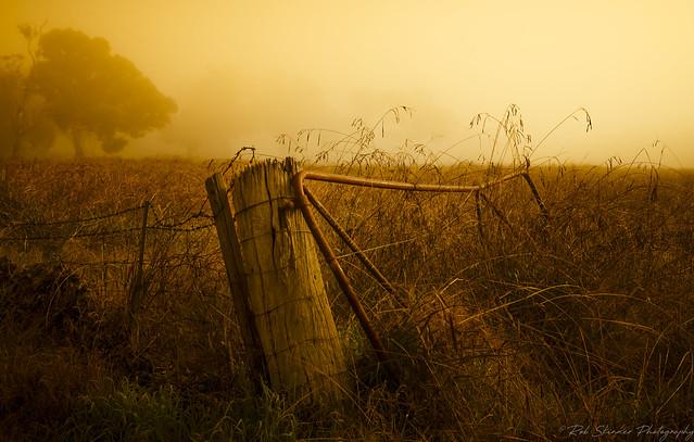 Always shut the gate........