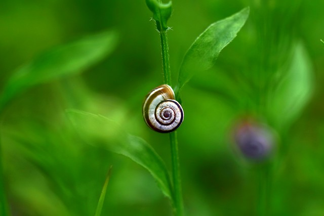 Snails in the wind