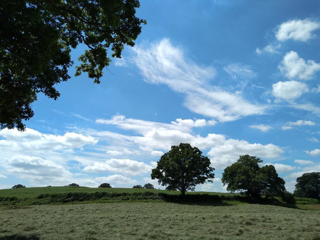 Whispy sky and Mown meadow