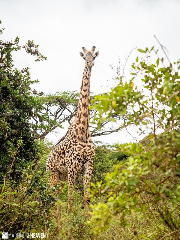 Kenya - 2962
