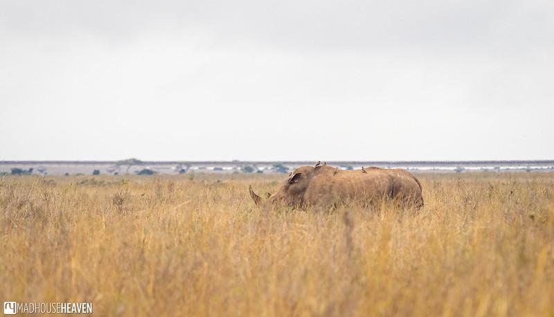 Kenya - 2840